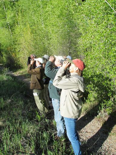 Early morning birding at the Maroon Creek Wetlands in Aspen