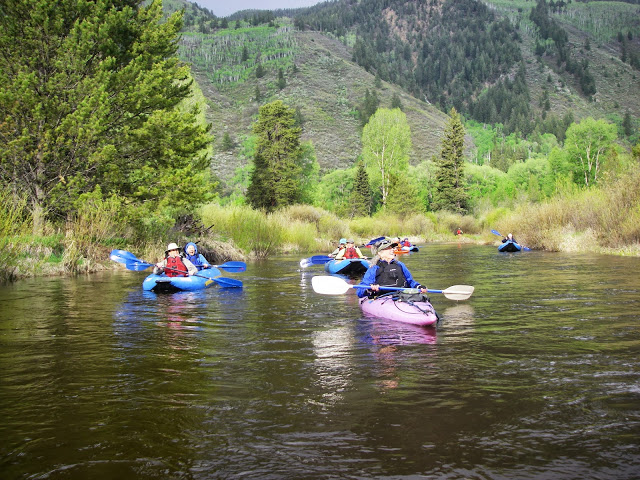 An early evening float east of Aspen to see nesting Great Blue Herons. This colony of Blues, at  8,000 feet in elevation, is the highest one in N.A. and is the only one occurring in blue spruce trees.