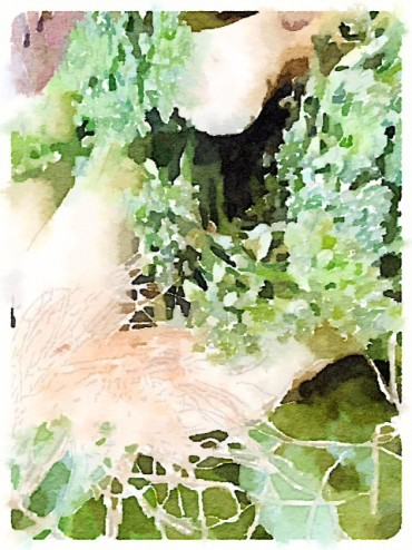 The same picture as above manipulated by the Waterlogue App on my iPhone. (Thanks, Tricia)
