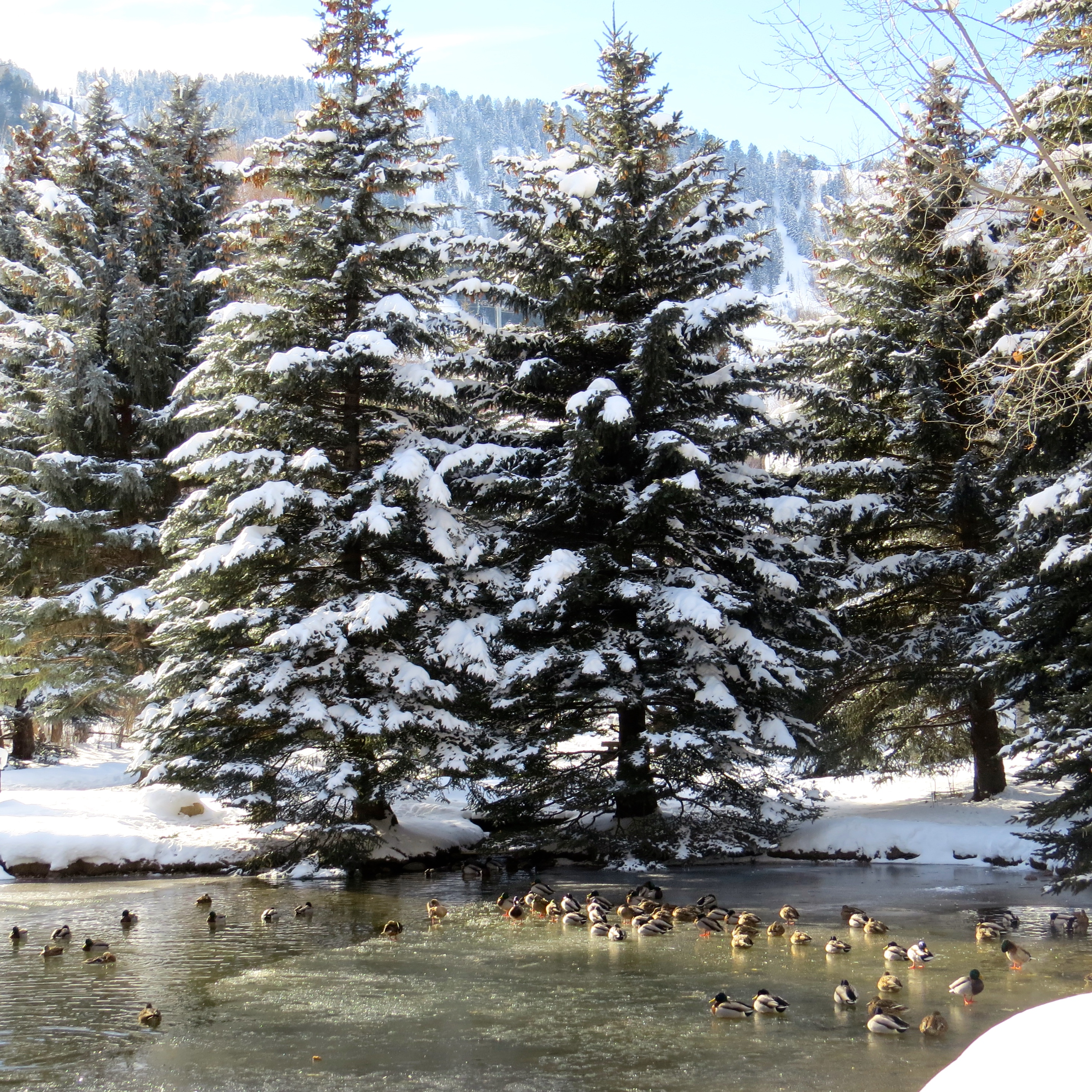 Happy Holidays from Glory Hole in Aspen, near the base of Ajax Mountain. Hoping you get all your ducks in a row to welcome in the New Year.