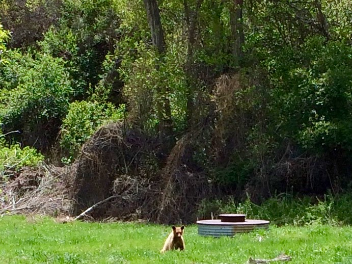 The bears are wide awake and on-the-move. We already have bear tales to tell. Donna Chase photo.